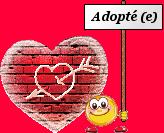 Siam et Thaï - Adoptés ! 2571939680