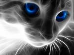 Алегра-cats