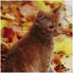 Leafpaw*