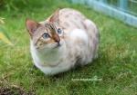 .Leopardpaw