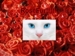 RoseFur