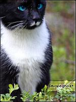 Smokeghost