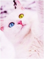 Pinkbee
