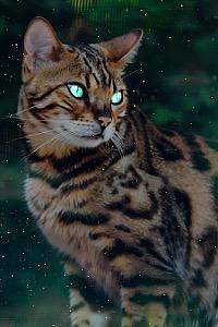 Cheetahrun