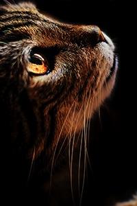 Jaguarkit.