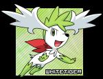 WhiteTiger