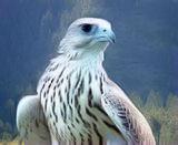 winterhawk99