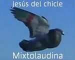 YO EL DEL CHICLE