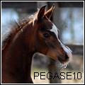 PEGASE10