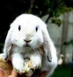 bunny1999