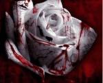 Crystal.m.rose