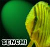 Benchi