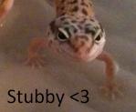 stubby_leopard