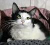 Les chats Chipie11