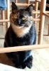 Les chats Jeanne10