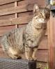 Les chats Sierra12