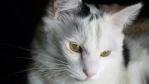 poussycat