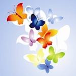 papillon74
