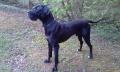 doggy_doggy