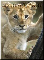 Lioness Vitani