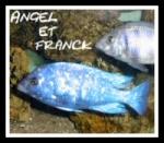 Angel et Franck