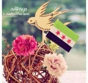 أحلام الجزائرية
