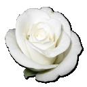 مدونتي ( خفقات قلب مدمى بالذكريات )  - صفحة 3 3083896227