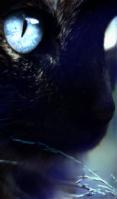 Pétale Bleu