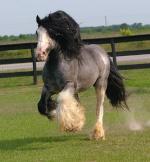 bloodyhorse99