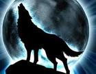 Lobo nocturno