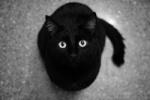 Blacky*