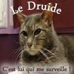 Le_Druide