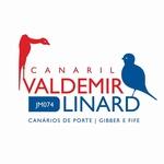 Davi Nabuco Linard