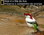 UNIVERSO DOS CANARIOS - Cor 2738-51