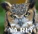 Yah,Rly!