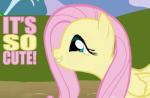 Kanter Pony