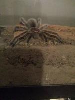 SpiderSam