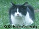 SOS-Help-Aniimals