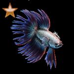 Vente et Achat de matériel aquariophile 12-98
