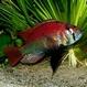 Vente et Achat de matériel aquariophile 34-60