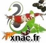A²TP :club aquariophilie et terrariophilie de la Picardie 48-65