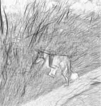 Wildbeere