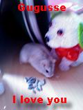 Gugusse-Hamster