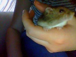Love-Hamster59