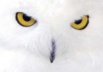 owls.pda