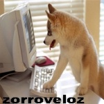 Zorroveloz