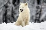 Black_Wolfye