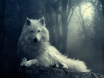 Light-of-wolf