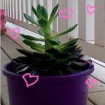 Cactiberry