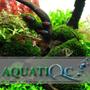 Aquatiqc